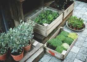Potted plants in wooden boxes